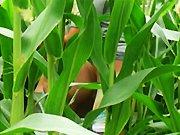 On baise dans un champ de maïs